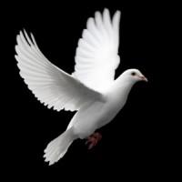pentecost-germany-200x200